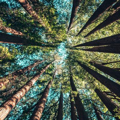 Diversifier - Arbre forêt
